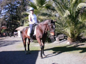 Casey, my horse nerd