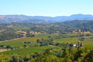 Dry Creek Valley--Collier Falls Winery