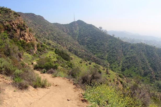 Wonder view trail Griffith Park